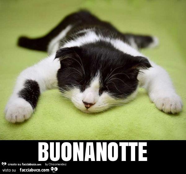 Gatto Stanco Buonanotte Facciabuco Com