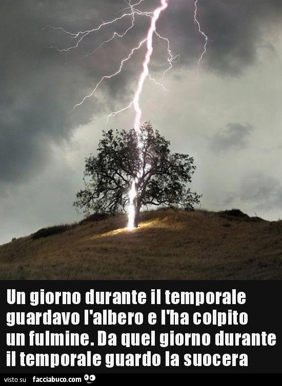 Un giorno durante il temporale guardavo l'albero che ha colpito un fulmine.…  - Facciabuco.com
